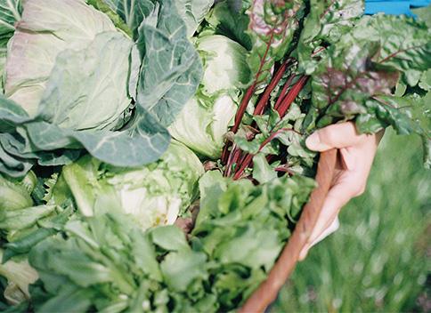 採りたて野菜で一緒につくるサンドイッチ